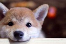 Cute & fuzzy