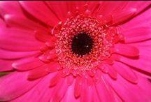 In The Garden / Garden, Flowers, Toddler Garden, Fairy Houses, Fairy Garden, Play house, Wooden Wendy House. Vegetable Garden