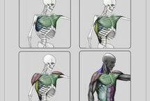 8.5.Anatomy / Anatomy Study Reference