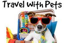 Pets / Pets, travel, mascotas.