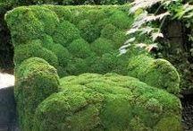 Puutarha / Garden
