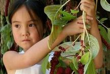 School Gardens / Interested in schooling for sustainability? A garden is often a great starting place.