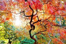 Seasons: Fall, Autumn = Changing of the leaves, Color / Fall, Autumn, changing of the leaves, color  / by Rob Grace