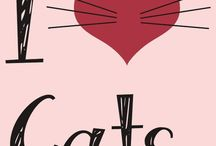 Gatos / Amo todos os felinos