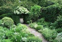Planteringar & växter