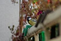 DIY dokarmiamy ptaszyny/  Seeds for Birds !