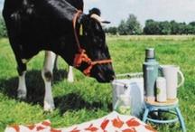 picnic a gogo