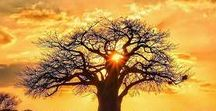 Our Home and Inspiration - Africa