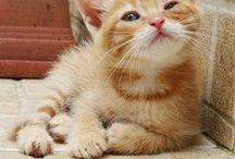 Kissat, cats