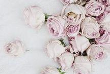 HdeP Antique Rose