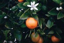 HdeP Orange Blossom & Bougainvillaea