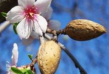 Subtle Almond Lampe Berger / Subtle Almond (Amande Subtile) is smooth, featuring sweet almonds, aniseed, sandalwood, vanilla, hawthorn, jasmine, musk and amber. #SubtleAlmondLampeBerger / by Ann's Fine Gifts, Houston, TX