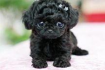 Soo cute / by Kayleigh Ohnemus
