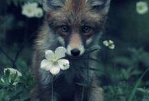 Állatos-virágos