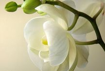 Flowers and Plants / by Susan Peavey
