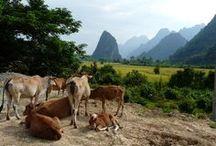 Destination Laos / Découvrez le Laos grâce à Elophantus Voyages. L'Asie comme vous ne l'aurez jamais vue ... http://www.elophantusvoyages.com/laos/nos-circuits-au-laos.html
