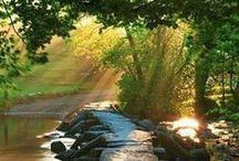 Komorebi / Japanese: the effect of sunlight filtering through leaves.