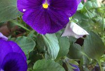 My photo ❤; flowers