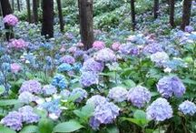 Secret Garden / Trees, secret doors, flowers, magic