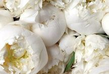 White Flowers / Pure white flowers.