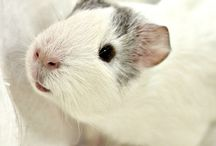 whiskers / Pet ideas for our puggle, kitty and piggies!!  / by Rebekkah Stewart