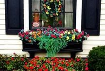 Window Box Contest 2014 / Entries from our 2014 Window Box Contest! Enter photos of your beautiful garden creations today at www.WindowBoxContest.com