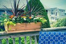 WindowBoxBeauty - Photo Contest / We want to see your #beautiful window box #photos!!!  Follow us on Instagram: https://www.instagram.com/hooksandlattice + share/tag your photo using #WindowBoxBeauty @hooksandlattice  $100 PRIZE each week! bit.ly/1NPrZIt