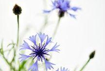 La nature est belle / Chez Eye Care nous aimons et favorisons les bienfaits de la nature