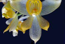 Orchidée / by annie léonard