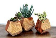 Modernised Plantlife