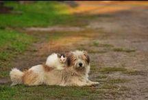 So Cute  /  Tão Fofos / Puppies and cuddly animals. Animais filhotes e fofos.