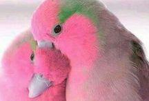 Divine Gifts  /  Presentes Divinos / Animals and Nature. Animais e Natureza.