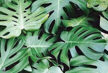 References: Foliage