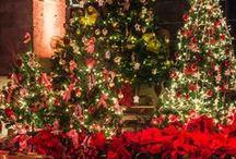 Inspiración | La Floreria | Navidad | Christmas