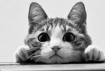 Cute animals / A compilation of all ze cutest animals on ze Internet!