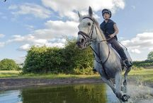 Nurstead Court Equestrian / Nurstead Court Livery provides superb care and facilities for your horse:  http://www.nursteadcourt.co.uk/equestrian/