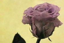"""Flores Liofilizadas / La liofilización es un método de secado que consiste en la congelación de los pétalos o flores a temperaturas bajo cero en una cámara sometida a muy baja presión atmosférica donde por """"sublimación"""" los cristales congelados del vegetal pasan a estado gaseoso hasta quedar la planta totalmente seca."""