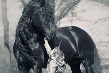 Horses for her