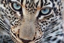 Rare and Wonderful Animals