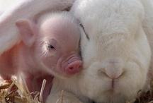 Animal Cuteness Overload