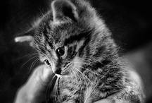 Cute animals / a collection of furry cuteness!