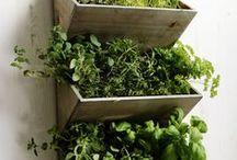 Φυτά και καλλιέργεια