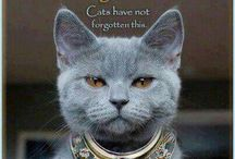 Animals - Cats / Love cats, they are so other-worldly. #spiritofaustralia, #australia, #australianculture, #cats