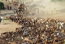 Australia - Cattle Stations / Australia has some of the biggest cattle stations in the world.