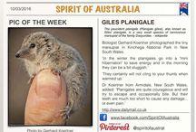 Australia - Pic Of The Week / Once a week we will pin a slide with our Pic Of The Week #australia, #spiritofaustralia, #picoftheweek