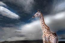 Worldwide Animals  / by Tschenny Sunshine