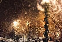 Leaves and snowfall / by Chelsey Brianne