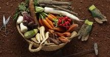 Vergeten groente