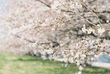 Frühling in der Luft