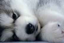 Cute & Furry